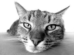 sad cat Victor